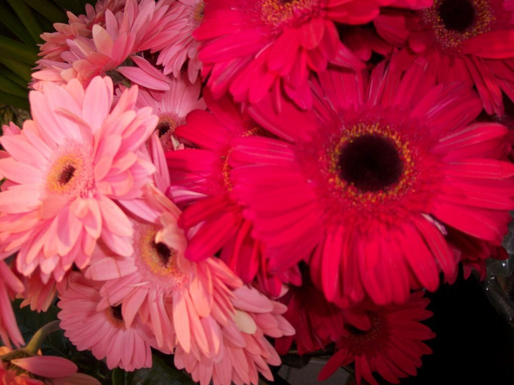 imagenes-fotos-flores-17