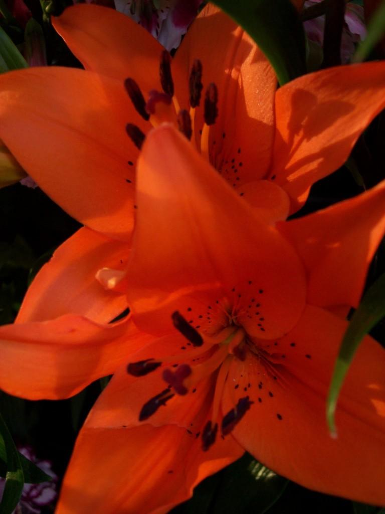 imagenes-fotos-flores-18
