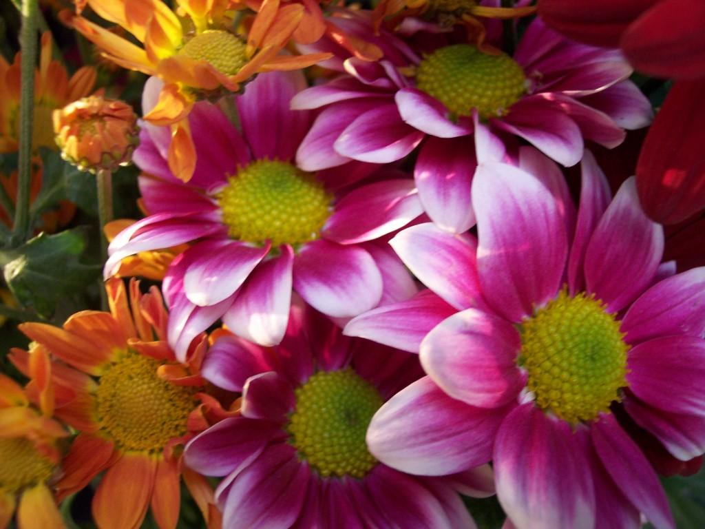 imagenes-fotos-flores-19