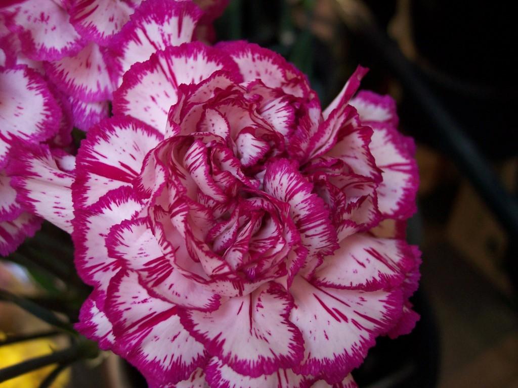 imagenes-fotos-flores-20