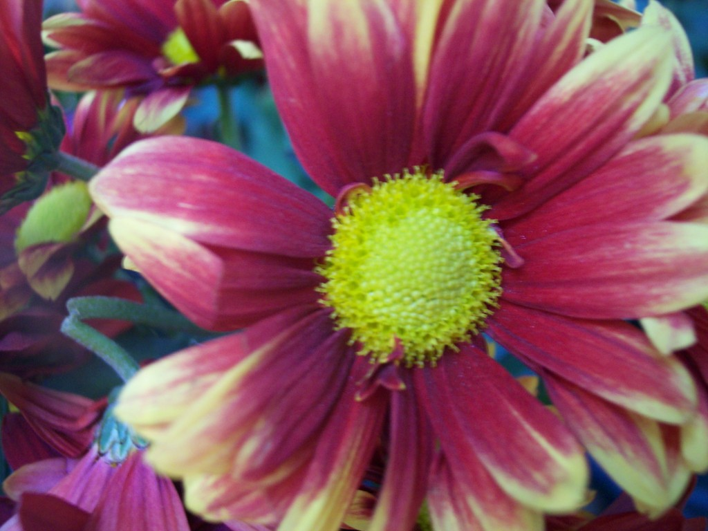 imagenes-fotos-flores-23