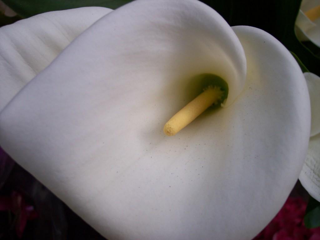 imagenes-fotos-flores-24