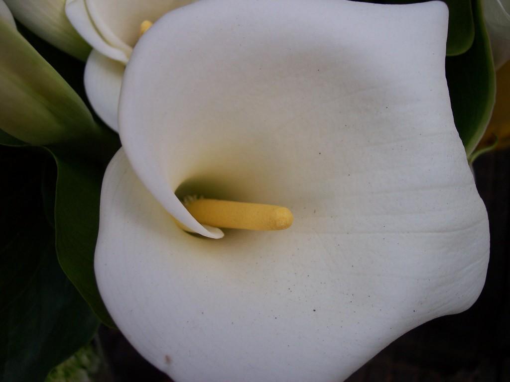 imagenes-fotos-flores-25