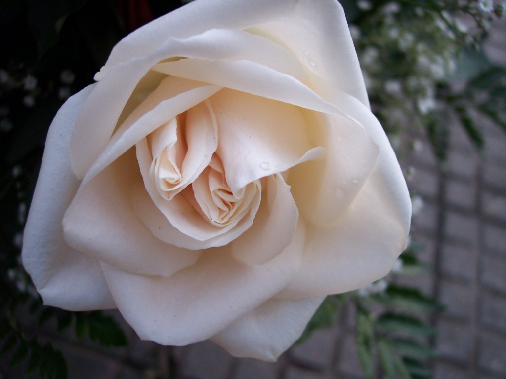 imagenes-fotos-flores-26