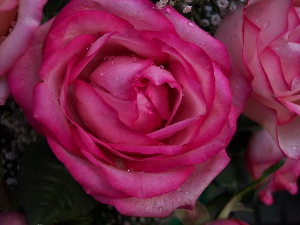 imagenes-fotos-flores-28