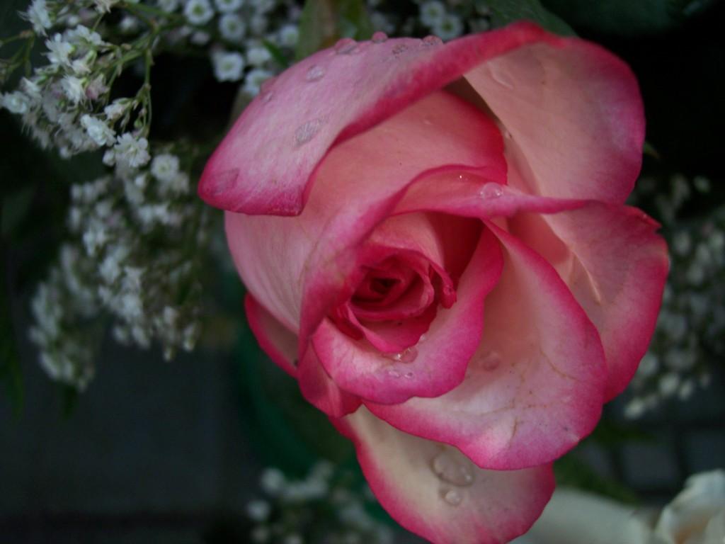 imagenes-fotos-flores-29