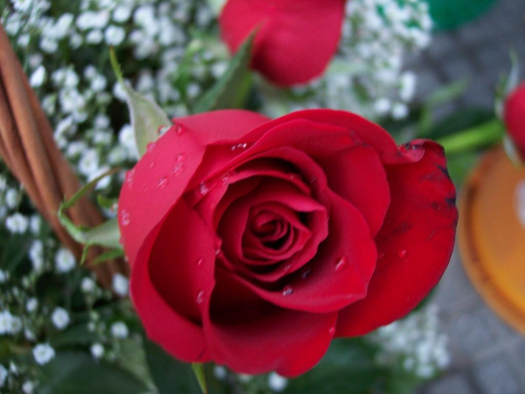 imagenes-fotos-flores-30