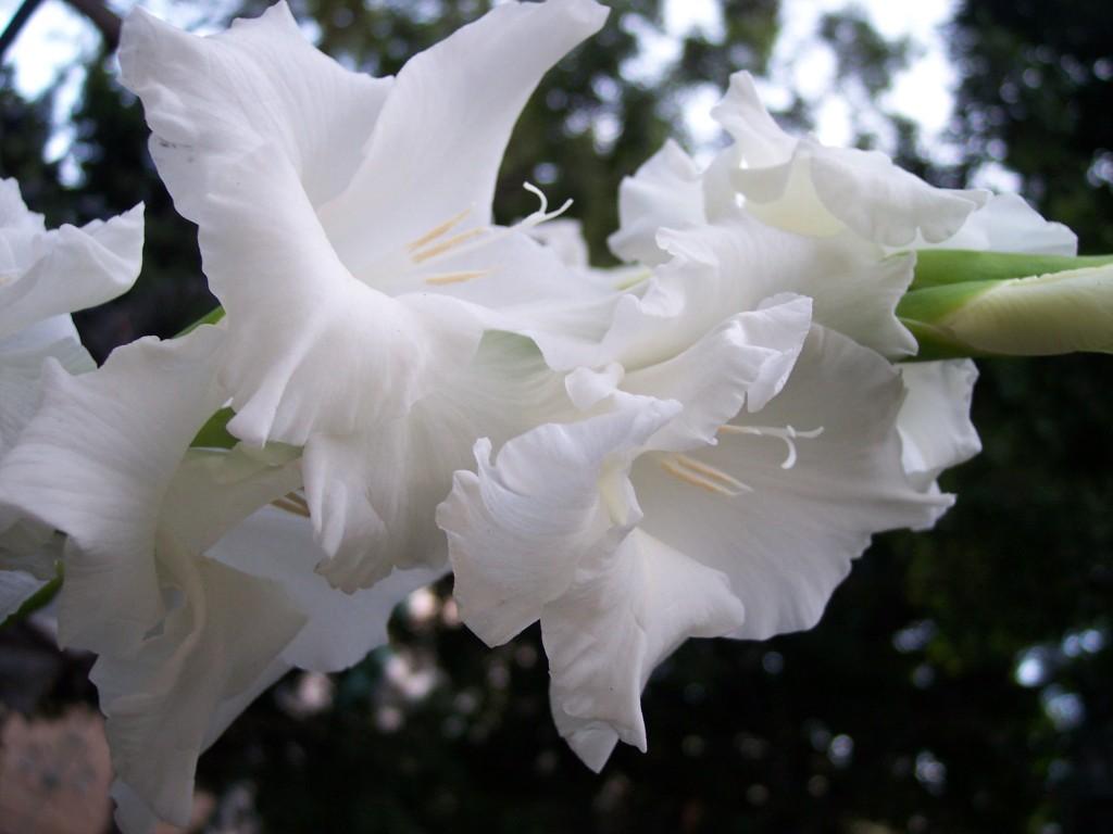 imagenes-fotos-flores-32