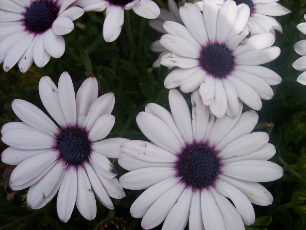 imagenes-fotos-flores-33