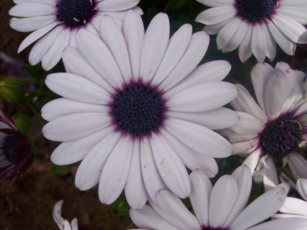 imagenes-fotos-flores-34