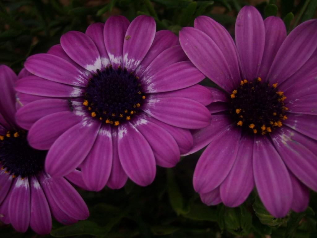 imagenes-fotos-flores-36