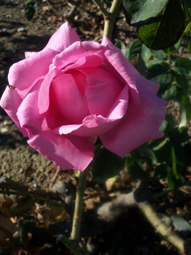 imagenes-fotos-flores-37