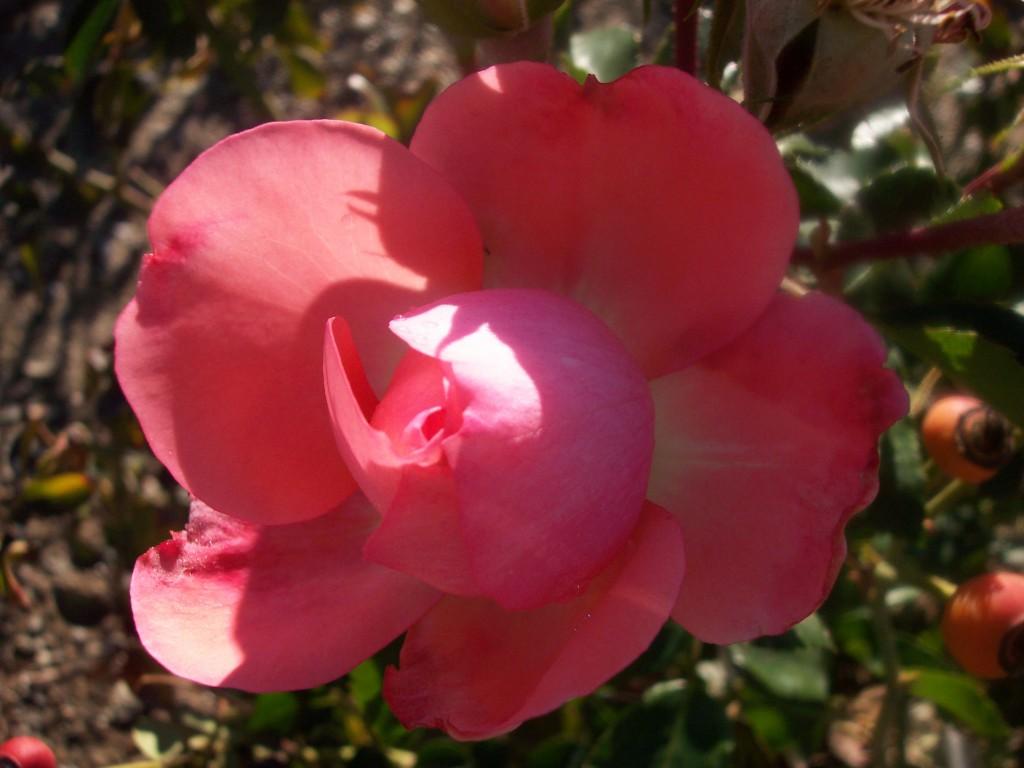 imagenes-fotos-flores-39