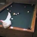 Cómo jugar al billar con una polla