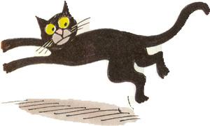 gato-cat