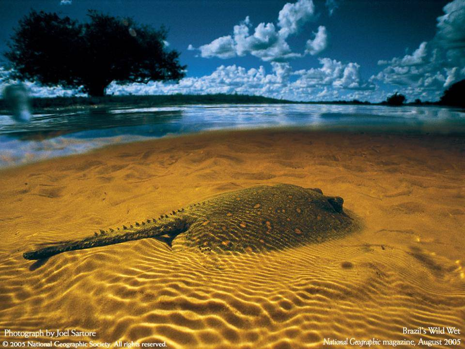 imagenes-naturaleza-national-geographic-2005-06
