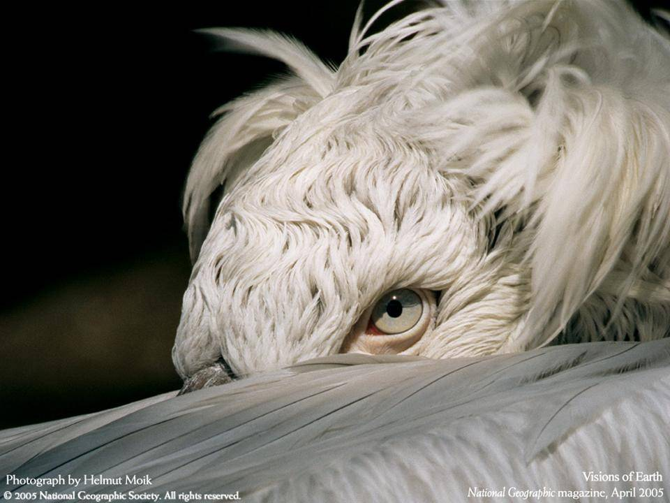 imagenes-naturaleza-national-geographic-2005-13