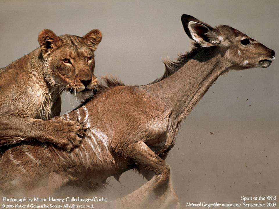 imagenes-naturaleza-national-geographic-2005-14