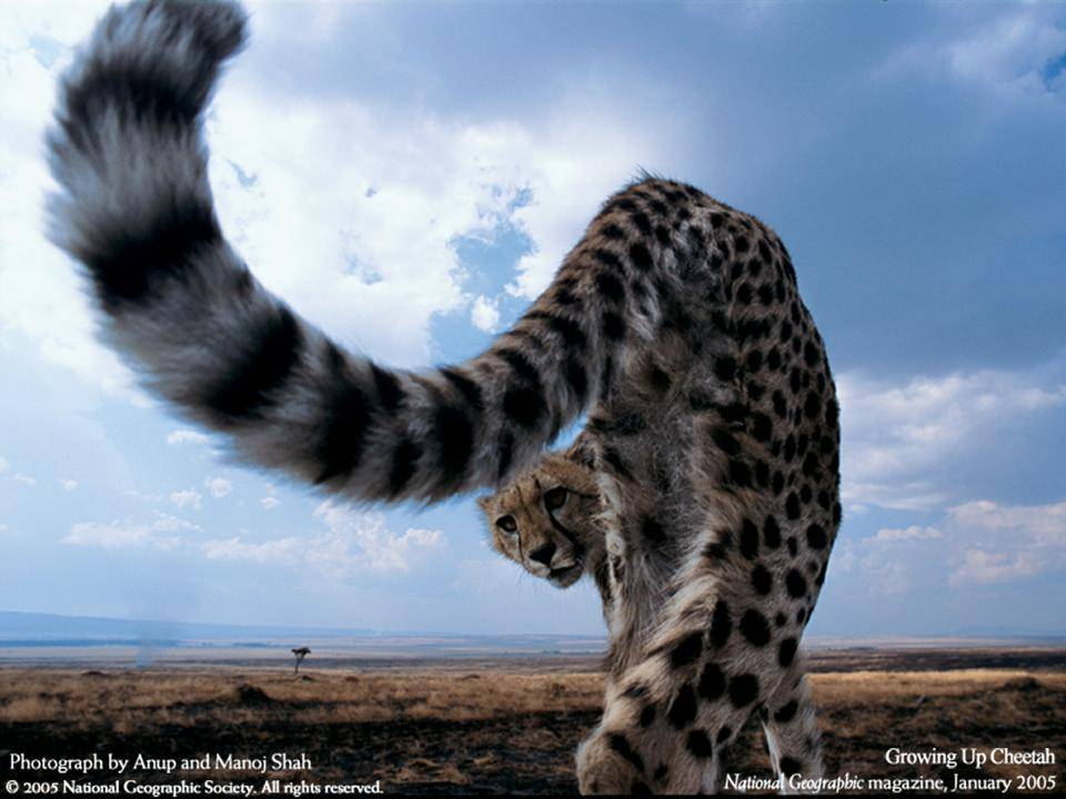 imagenes-naturaleza-national-geographic-2005-19