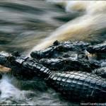 National Geographic 2005: Imágenes de naturaleza