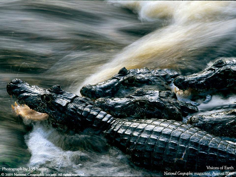 imagenes-naturaleza-national-geographic-2005-27
