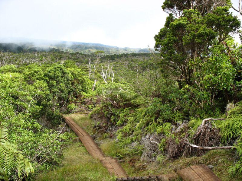 lluvia alakai wai-ale isla hawaii Kauai