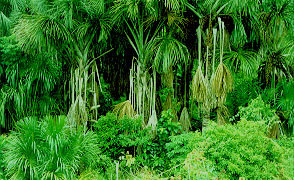 lluvia choco lloro Quibdo Tutenendo selva