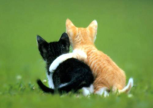 animales cachorros gatitos