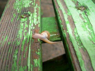 caracol-flexible-7
