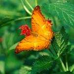 Imágenes y fotos de mariposas