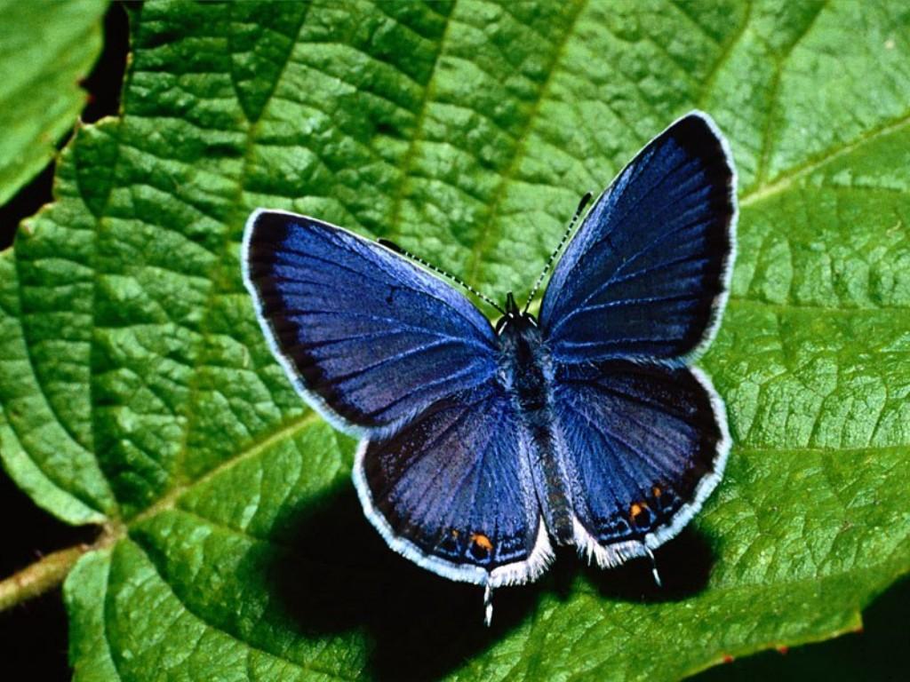 imagenes-fotos-fondos-wallpapers-mariposas