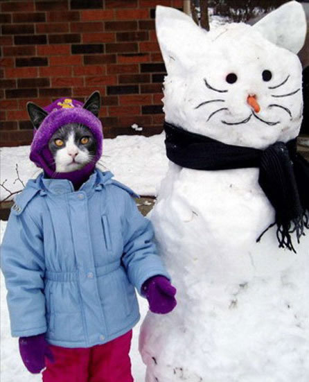 imagenes-graciosas-navidad-navidenas-gato-christmas-funny-picture
