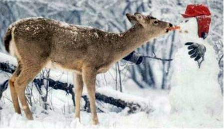 imagenes-graciosas-navidad-navidenas-reno-zanahoria-muneco