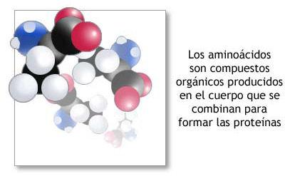 moleculas-aminoacidos