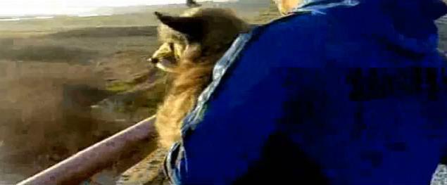 perro lanzado puente Svajunas Beniukas