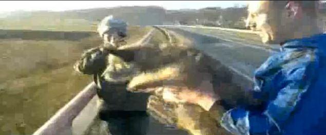 perro tirado puente Svajunas Beniukas carretera
