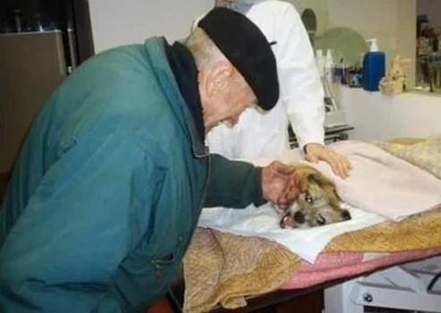 perro tirado puente pipiras veterinario acariciando