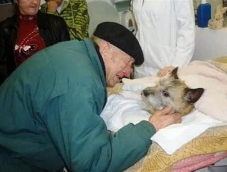 perro tirado puente pipiras veterinario hombre