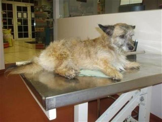 perro tirado puente pipiras veterinario patas