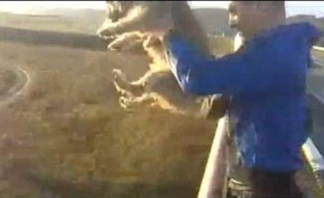 perro tirar puente Svajunas Beniukas