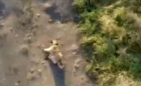 perro tiro hombre puente Svajunas Beniukas