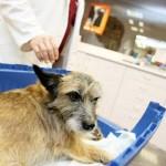 Las crónicas de Morbo: Un perro muere al ser tirado por un puente