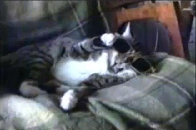 videos humor gatos
