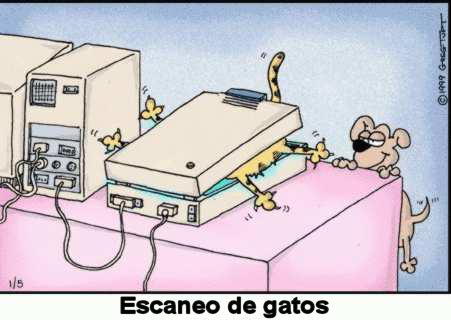 animales_humor_escaner_gatos