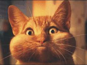 animales_humor_gato_mofletes