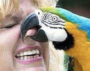 animales_humor_loro_nariz