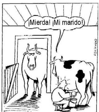 animales_humor_marido_vaca