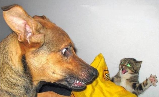 animales_humor_perro_gatito