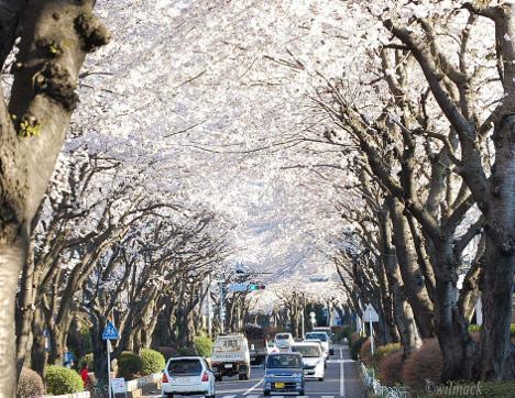 arboles kanagawa