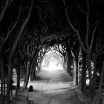 TOP 10 de túneles con árboles para pasear